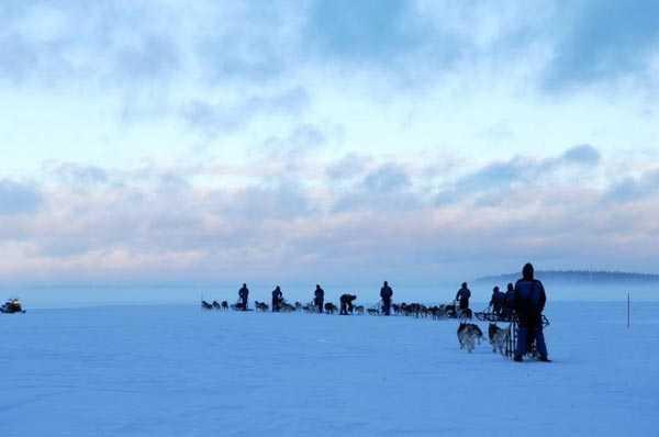 Schlittenhunde-Safari Inari - Tujareisen - Urlaub in Skandinavien